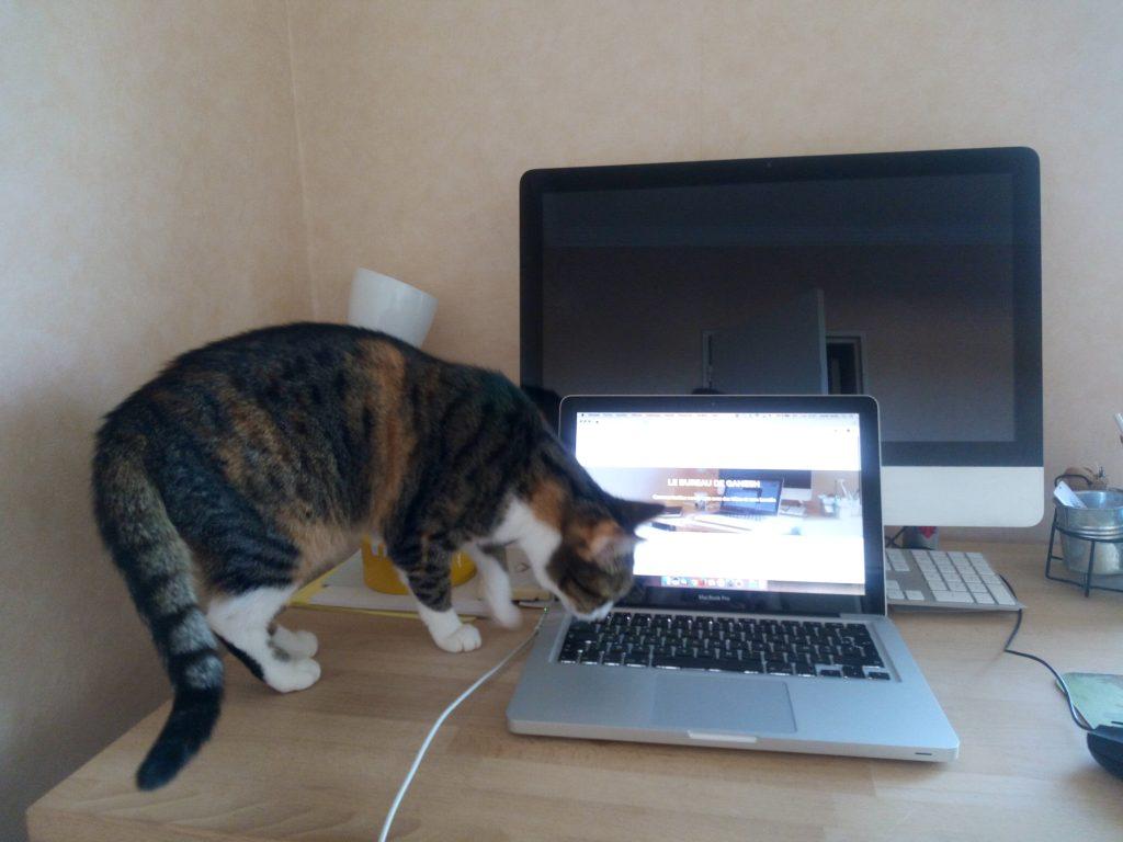 Ganesh, le chat du bureau
